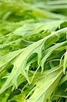 Green salad (full-frame)
