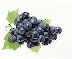 Raisins noirs avec des feuilles de vigne et de la rosée