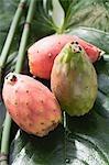 Three prickly pears on leaf
