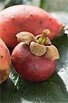 Le mangoustan et figuiers de barbarie sur feuille
