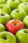Une pomme rouge parmi les pommes vertes