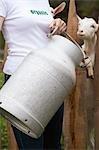 Femme avec du lait peut devant l'étal de chèvre