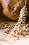 Ohr von Weizen, Körner von Weizen und Weizenbrot