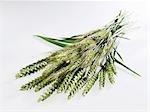 Ears of wheat and rye