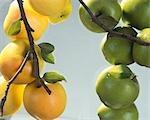 Pommes jaunes et verts