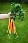 Hand halten frische Bio Karotten