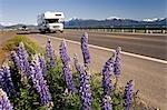 Motorhome driving along Homer Spit w/Lupine wildflowers on roadside Kenai Peninsula AK Summer