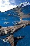 Blacktip reef sharks at surface.