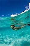 Snorkeler in shallow water.