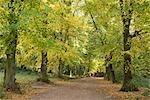 Autumn trees in Hampstead Heath