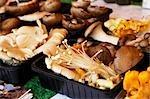 Variety of Mushrooms, Salisbury Market, Salisbury, Wiltshire, England
