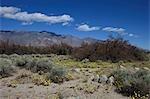 Historique National de Manzanar Site, Sierra Nevada, Owens Valley, Californie, USA
