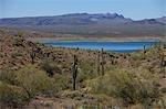 Saguaro Cactus Arizona côté de Lake Havasu, Californie en arrière-plan, USA