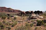 Pferde Weiden Ost-Arizona, USA