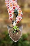 Main tenant la plante sur le plantoir de jardin