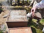 Opened bee hive