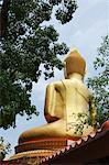 Or Bouddha avec l'arbre de Bodhi, Province d'Ubon Ratchatani, Thailand