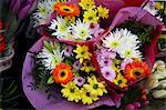 Flowers, Bath, Bath and North East Somerset, Somerset, England, United Kingdom