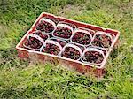 Boîtes de cerises sur l'herbe