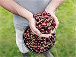Man holding freshly picked cherries
