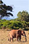 Elephant at Tsavo National Park, Kenya
