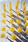 Mimosas en flûtes à Champagne en plastique