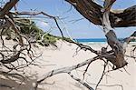 Dunes de sable sur la plage de Piscinas, près Arbus municipalité, la Province du Medio Campidano, Sardaigne, Italie