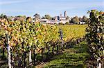 Vineyard of Chateau Saint-Georges, Saint-Emilion, Bordeaux, Gironde, Aquitaine, France