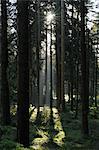 Parc National de forêt, Achtermann, Harz, Basse-Saxe, Allemagne