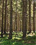 Forest, Harz National Park, Lower Saxony, Germany