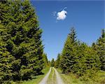 Chemin de terre, la forêt, le Parc National du Harz, Basse-Saxe, Allemagne