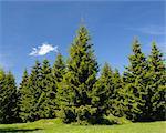 Forêt, le Parc National du Harz, Basse-Saxe, Allemagne