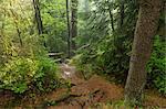 Sentier de randonnée, St Andreasberg, Parc National du Harz, Basse-Saxe, Allemagne