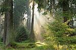 St Andreasberg, le Parc National du Harz, Basse-Saxe, Allemagne