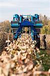 Grape Harvester at Chateau Saint-Georges Saint-Emilion, Bordeaux, Gironde, Aquitaine, France