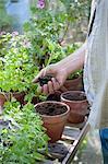 Jardinier travaille à potting shed