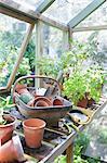 Gartengeräte auf Werkbank in Potting shed