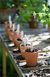 Pots en terre cuite avec des étiquettes sur établi dans potting shed