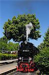 Harz Narrow Gauge Railways, Wernigerode, Harz, Saxony Anhalt, Germany
