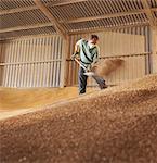 Farmer in grain store