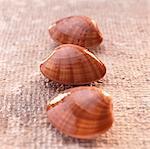 Smooth vernis clams