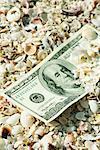 One-hundred dollar bill half buried in seashells