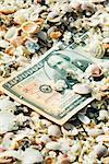 One-million dollar bill half buried in seashells