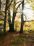 Trees in autumn, near Worthsee (Woerthsee), Bavaria, Germany