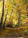 Route forestière près de Worthsee Woerthsee, Bayern, Allemagne,