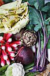 Gros plan d'une variété végétale