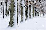 Forêt en hiver, la Franconie, Bavière, Allemagne