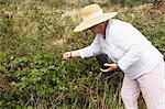 Woman Gardening, Domaine de l'Ardagnole, Fajac-en-Val, Aude, Languedoc Roussillon, France