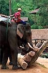 Camp d'éléphants de Thaïlande, Chiang Mai, Mae Sa, Elephant Show