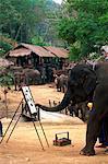 Thailand,Chiang Mai,Mae Sa Elephant Camp,Elephant Show,Elephant Painting with Trunk
